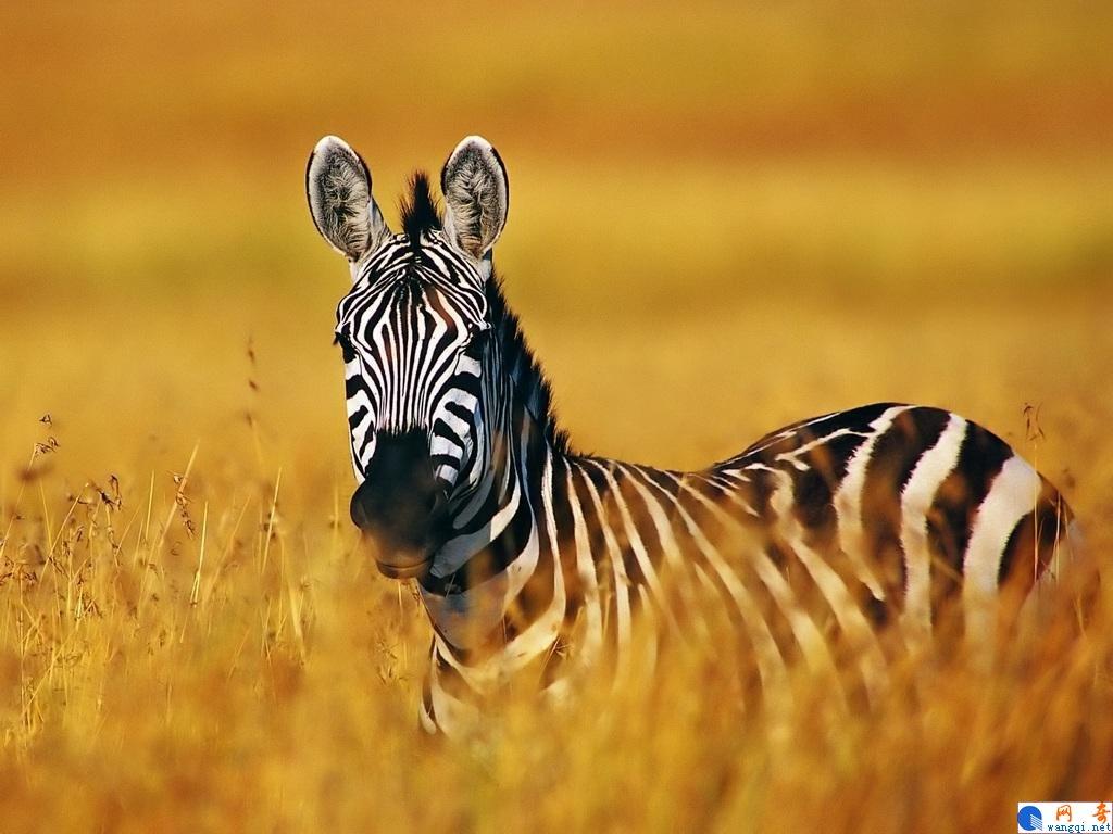 野生动物世界 - 网奇 www.wangqi.com