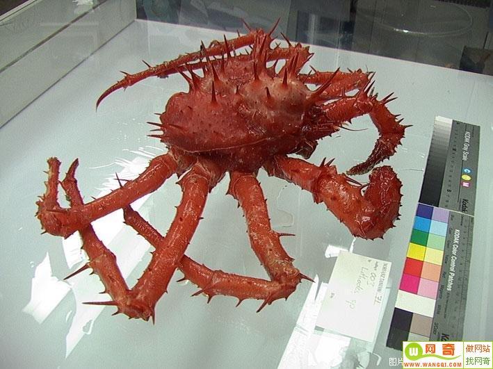 印度洋大海啸后发现的各种神秘生物!