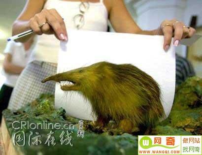 http://www.wangqi.com/upload/2006_04/060421215740097.jpg